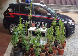 Padre agronomo insegna al figlio 16enne come coltivare la marijuana