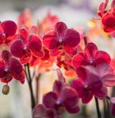 """Monte Porzio, dal 15 al 17 aprile si svolgerà la XXI edizione di """"Orchidee dal Mondo"""""""