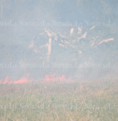 Emergenza incendi ai Castelli: un centinaio di persone evacuate in zona Nettunense