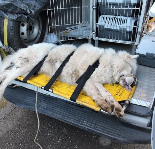 Velletri: nuova aggressione di un cane, grave una donna di 80 anni