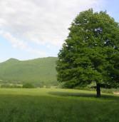 Nel Parco Regionale dei Castelli Romani il Bioblitz, l'esplorazione della natura