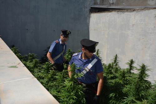 piazza-dante-piantagione-marijuana-1