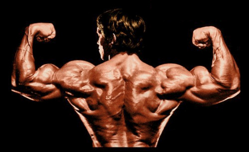 arnold-muscoli