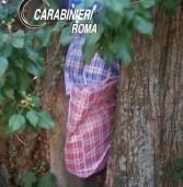 Monteporzio, trovati due borsoni di droga incastrati fra gli alberi