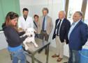 Rocca Priora, partita la campagna per la microchippatura dei cani e la sterilizzazione dei gatti