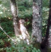 Rocca di Papa, trovato un cane impiccato nel bosco. Orrore fra la comunità