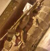 Rocca Priora, trovato cane impiccato nel centro storico