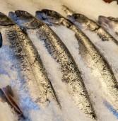 Ciampino: sequestrati 70 chili di pesce congelato venduto come fresco