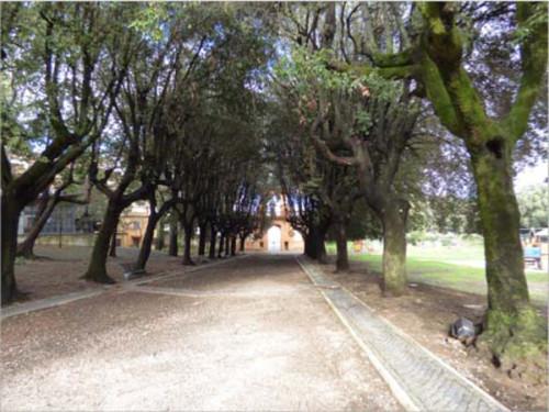 alberi-ombrellino
