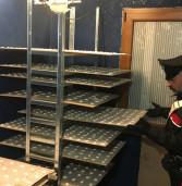 Laboratorio della droga: cocaina in teglie da pasticceria
